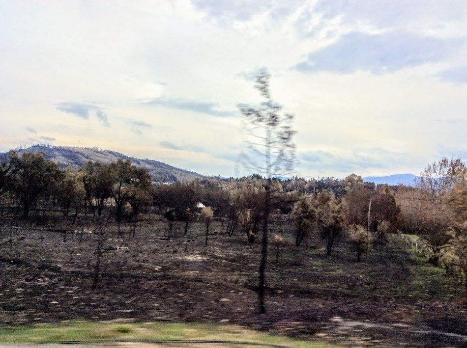 Fire devastation in Central Portugal